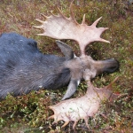 moose hunting trip ontario, ontario adventure trips